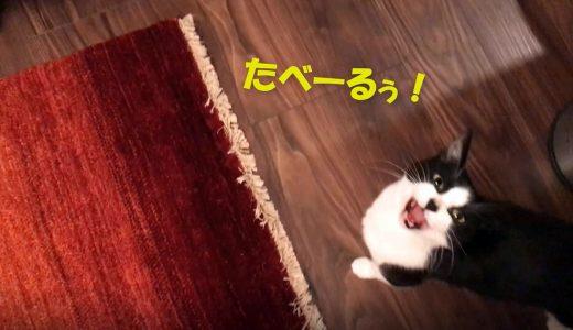 おしゃべり絶好調なおむすびさん【猫草&すき焼き】