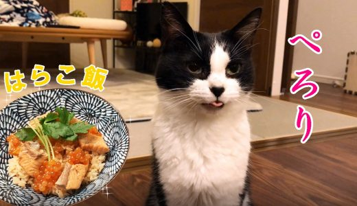猫おむすびさん、鮭とイクラの親子飯を食べる【はらこ飯】