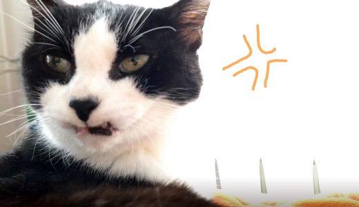 ビビリな猫、2回目の病院へ行く【かえるー!を連呼】