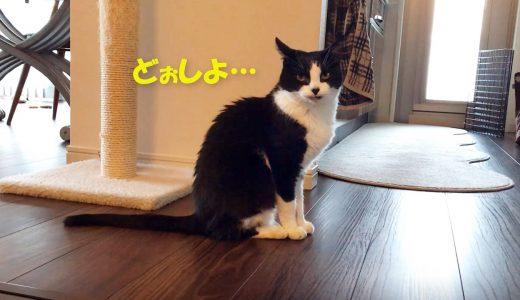 久しぶりのコタツに、ビビリ猫の反応は?🐱