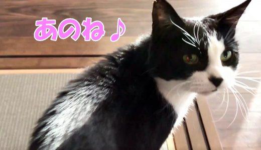 猫に話しかけられる朝、ゴキゲンでおしゃべり中!【猫草も培養中】