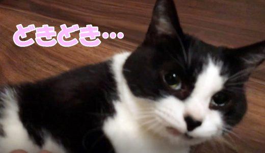 ビビリな猫、来客に精いっぱいのおもてなし【妹が泊まりで遊びに来たら…】