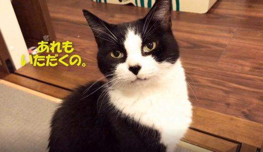猫おむすび、お刺身の後も味見係でスタンバイ…