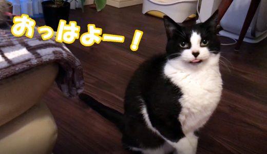 しゃべる猫おむすびさんの「おっはよー!」3連発