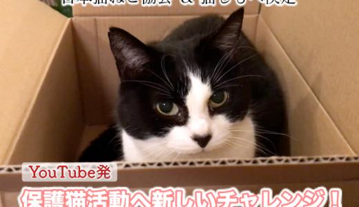 【保護猫プロジェクト】クラウドファンディング参加ご協力のお願い