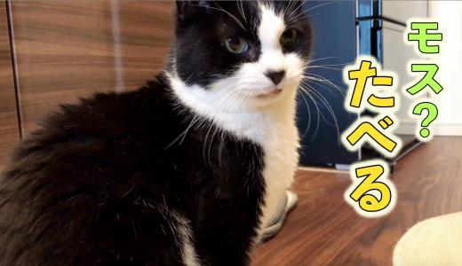 おしゃべり猫おむすび「ちゅーるよりモスバーガーください」