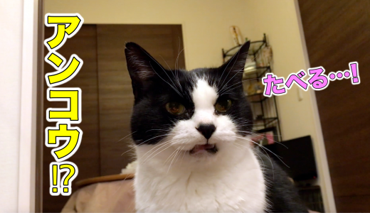 おしゃべり猫、アンコウに「食べるー!」を連発【12月のウマウマデー】