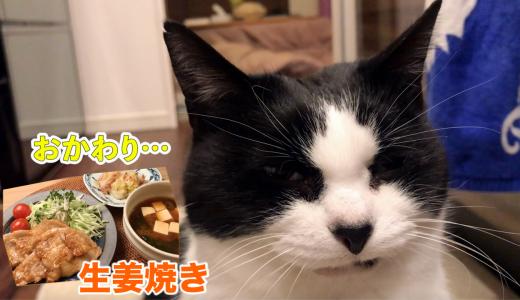 【猫と飯テロ】豚の生姜焼きを味見したおむすびさん