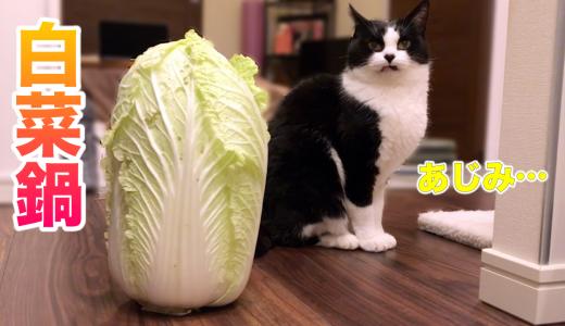 豚肉を味見したおむすびさんと、実家からもらった大きな白菜
