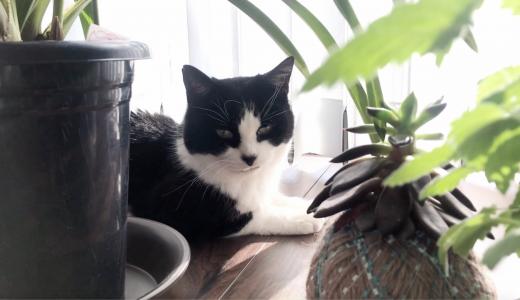 天気の良い日にまったりする猫とねこじゃすり