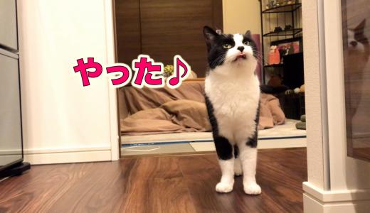 猫にとって、きっと一日で1番楽しみな時間【いつもの晩ごはん】