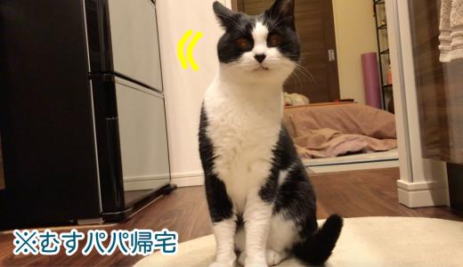 ササミにおしゃべり炸裂な猫【1月のウマウマデー】