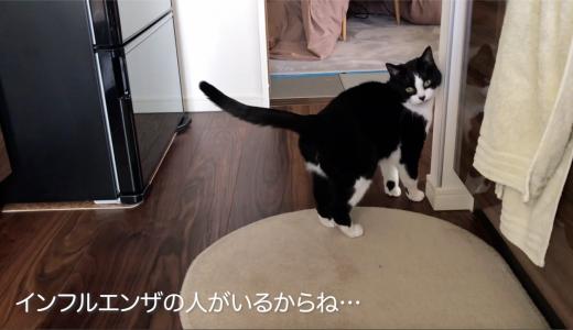 朝から窓全開「うわー♪」連発のしゃべる猫おむすびさん