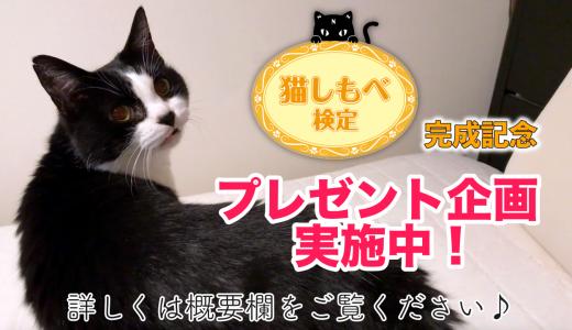 【猫しもべ検定】できました!記念プレゼント企画も実施中♪