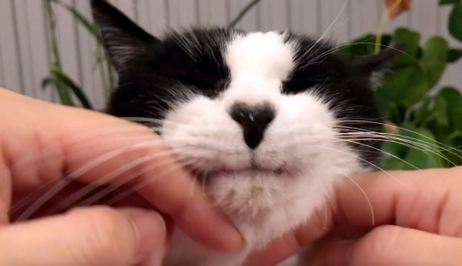 うっとり恍惚な表情を浮かべる猫がかわいい…