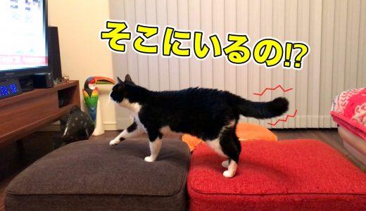 テレビの鳴き声に反応して、探しにいく猫
