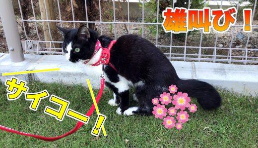 猫ムスビの雄叫び「お外でトイレ、気持ちい〜!」