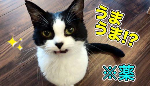 猫のご飯にクスリをこっそり忍ばせてみたら、反応は…?