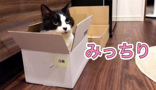 おむすびさん、小さなカマボコの箱に無理やり入ってご満悦