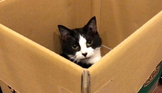 実家から届いた荷物のダンボール箱は猫のもの