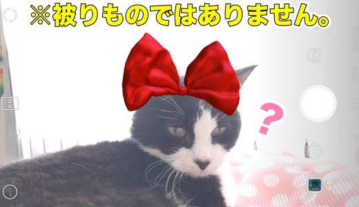 SNOWアプリ、猫の顔認証フィルターが可愛いので動画を撮ってみました^^