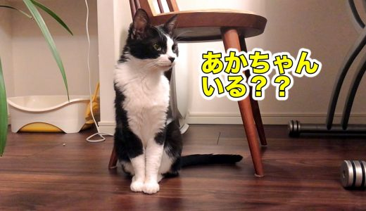猫のためのラジオを聴いたおむすびさんの反応