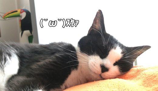 モフモフ冬毛の準備をはじめる猫【ぱくぱくローラー】