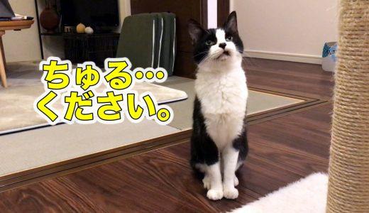 桃とちゅ〜ると猫