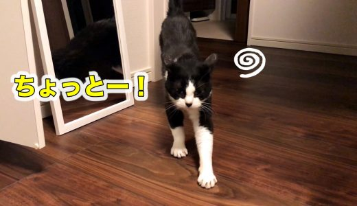 よくしゃべる猫、留守番に文句タラタラおむすびさん