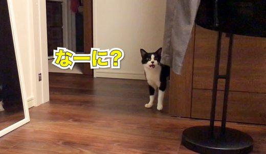 猫「なーに?」お返事上手な猫の遊びおねだり