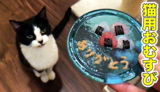 猫専用おむすびで、うちの子2年記念日をお祝い!