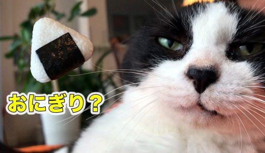 猫おむすびさんにお土産【ガチャガチャおにぎりん具】