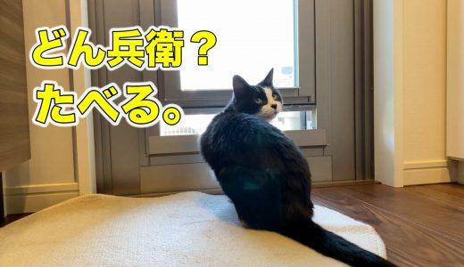 猫「どん兵衛ください…」