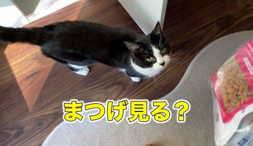 猫の長いまつ毛がかわいい【朝ゴハンと完熟メロン】