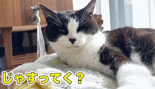 トロけすぎて形崩れした猫【ねこじゃすり初め2020】