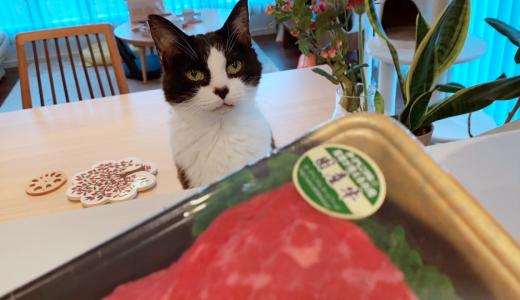 ローストビーフにワクワク、温泉卵に困惑する猫たち【7月のうまうまデー】