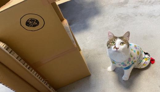 29級(ニクキュー)建築士と、それを手伝う猫【ニューおむすビル】